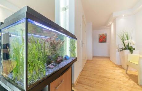 Aquarium im Eingangsbereich der Zahnarztpraxis